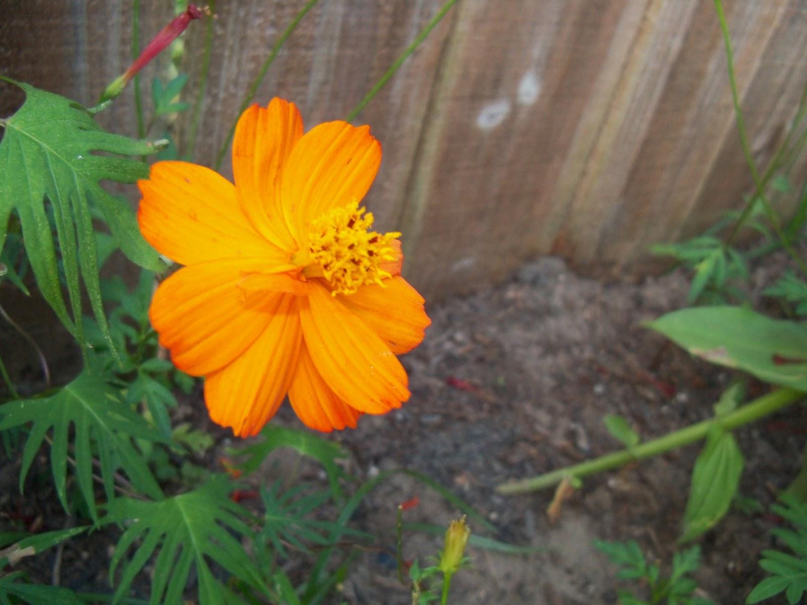 Gardening 2012 - 115_2051.JPG