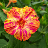 Gardening 2014 - 116_1971.JPG