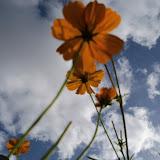 Gardening 2011 - 100_9990.JPG