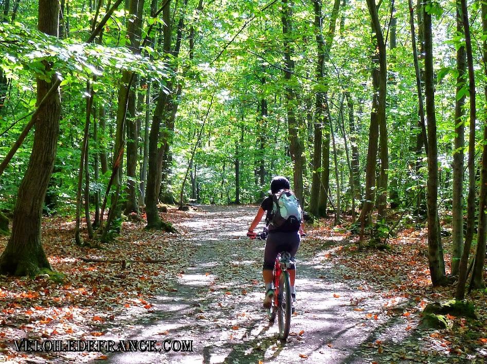 Dans la Forêt de Meudon - E-guide balade à vélo de Meudon à Sceaux par veloiledefrance.com