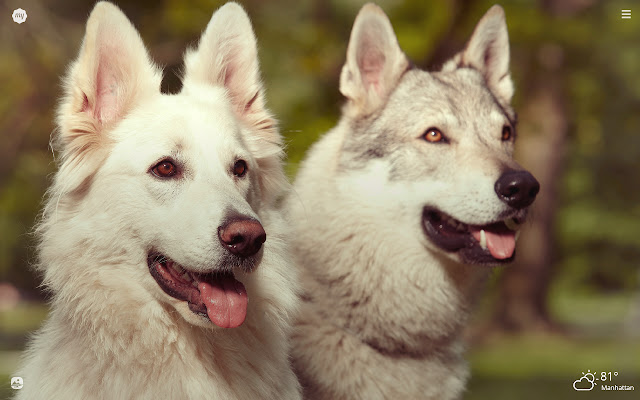 My Wolfdog - Lovely Puppy & Dog HD Wallpapers