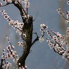 Tavernaro in Spring