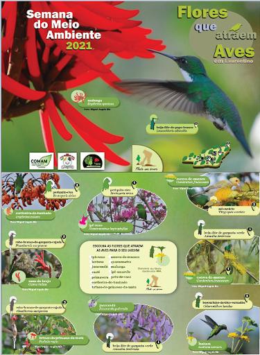 Folder Semana do Meio Ambiente 2021