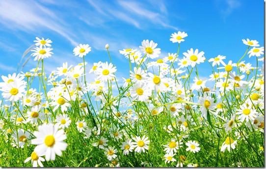 margaritas flores (22)