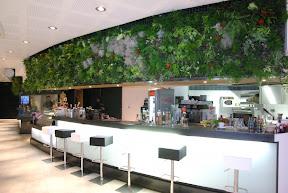 Grand tableau végétal dans un bar de Grenoble adresse : le bernard 38400 st Martin D' Hères bandol