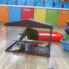 Introduction of Parrot and Peacock (Playgroup) 17.11.2016