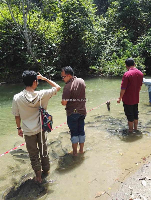 aktiviti ikan kelah di Kundasang