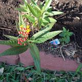 Gardening 2013 - 115_5371.JPG