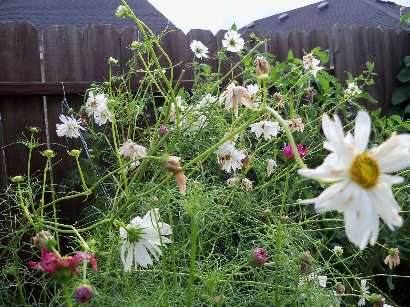 Gardening 2010, Part Three - 101_4694.JPG