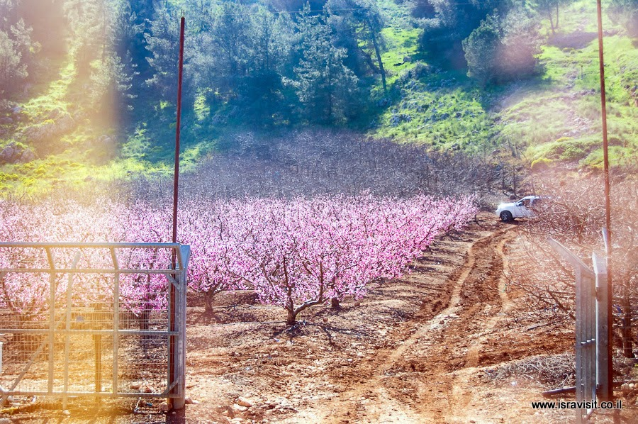 Сад в Верхней Галилее.