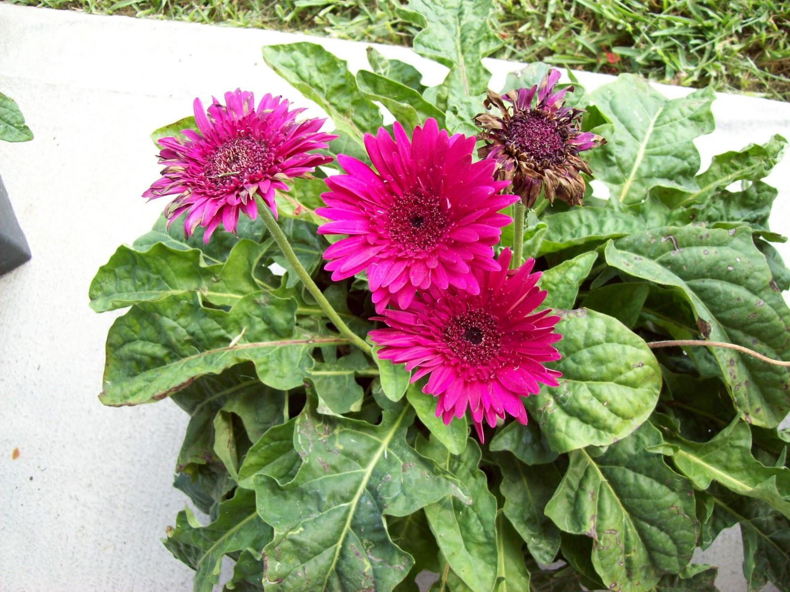 Gardening 2009 - 101_5041.JPG