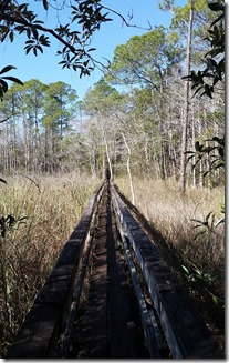 Long bridge over swamp-1