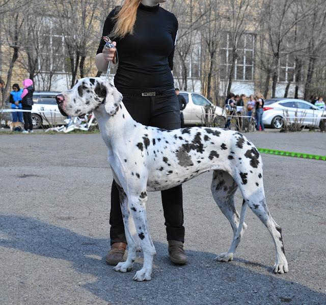 Кубок Аризоны-14(ПК)+ЧРКФ, Красноярск, 27 апреля 2014 DSC_5647