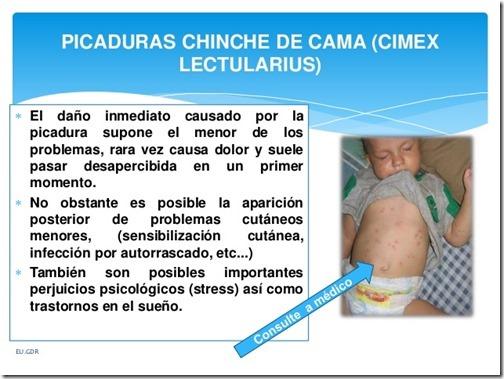 chinche-de-cama-cimex-lectularius-9-638
