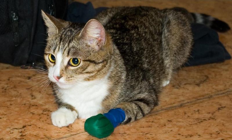 рана у кошки - перевязка