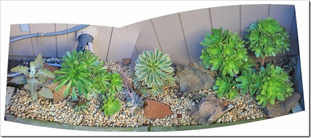 121218_backyard_succulent_bed_pano1