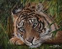 tigre pensativo