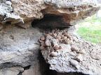 Co všechno se nenajde mezi kameny pod betonem...