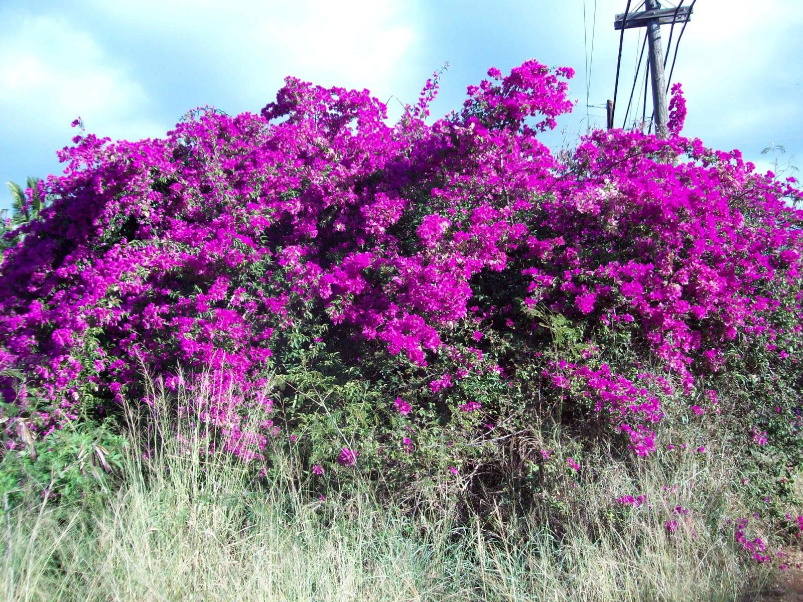 Hawaii Day 6 - 114_1750.JPG