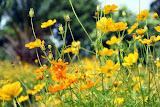 flower (9).jpg