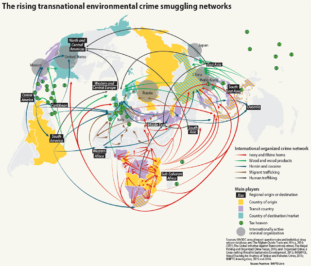The rising transnational environmental crime smuggling networks, including ivory and rhino horns, wood and wood products, heroin and cocaine, migrant trafficking, and human trafficking. Graphic: UNEP