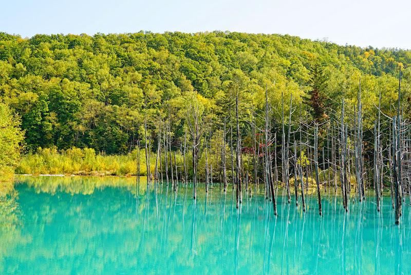 美瑛 青い池 写真3