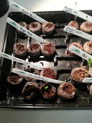 Jiffy Greenhouse 1 (3/20)