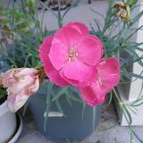 Gardening 2012 - IMG_20120520_174038.jpg