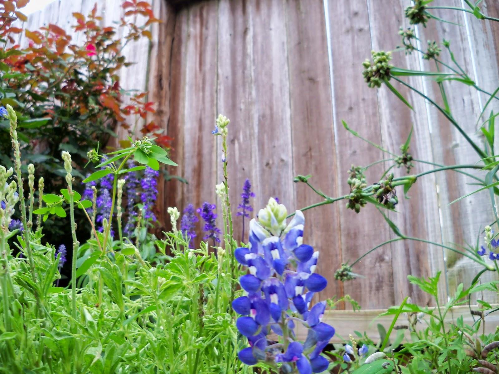 Gardening 2014 - 116_2585.JPG