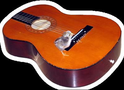 Haiga - Pile na gitari