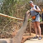 Banaantjes voor de olifant
