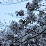 2014 Japan - Dag 1 - marjolein-IMG_0178-0106.JPG
