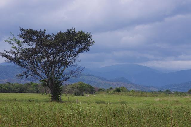 Finca La Graciela, 239 m (Tamarindo, Casanare, Colombie), 5 novembre 2015. Photo : J.-M. Gayman