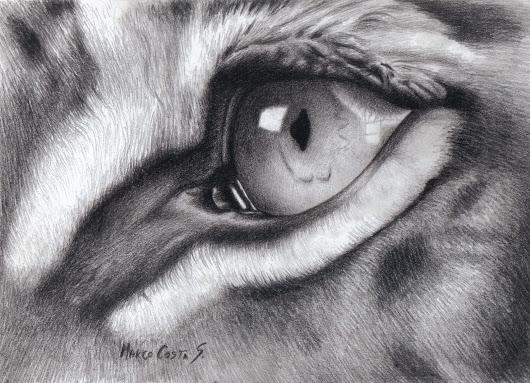 Dibujo De Un Ojo De Tigre, Elaborado A Lápiz Carboncillo