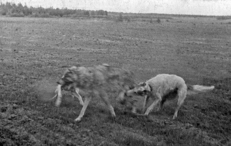 Ретро фото собак.  %25D0%2591%25D0%25B5%25D0%25B7%2520%25D0%25B8%25D0%25BC%25D0%25B5%25D0%25BD%25D0%25B8-13%25D0%25BF%25D0%25BC