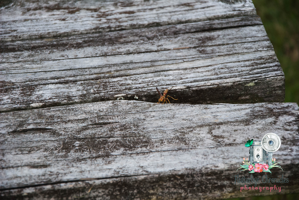 [Wasp+for+pet+blog+%28WW%29+watermarked%5B3%5D]