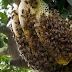 ltinho-PE: Operador de veículo trator sofre ataque de abelhas no município.