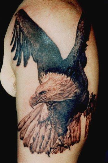 Eagle #1