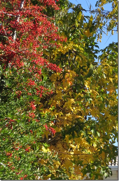 Autumn Colours May 2017 one