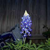 Gardening 2012 - 115_1201.JPG