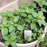 Gardening 2012 - 115_1399.JPG