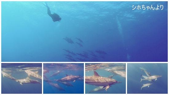 ハワイ島のシホちゃんのイルカの写真