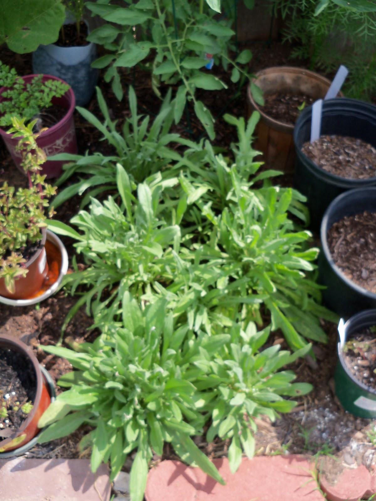 Gardening 2010, Part Two - 101_2697.JPG