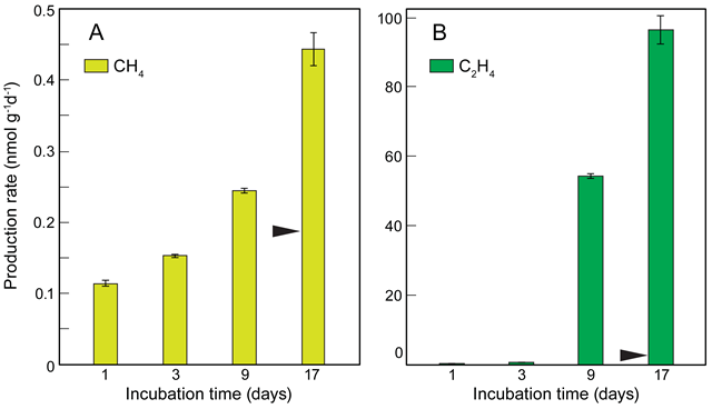 Production rates of CH4 and C2H4 from virgin low-density polyethylene (LDPE) pellets exposed to sunlight in air. Mean production rates of CH4 (A) and C2H4 (B) from LDPE virgin pellets incubated in air under ambient solar radiation for 1, 3, 9 and 17 days. The error bars represent the standard deviation of triplicate samples. The emission of CH4 in the dark treatment was below the detection limit and less than 0.3 nmol g-1d-1 for C2H4. The black arrow indicates the production rate of CH4 and C2H4 from virgin LDPE pellets incubated in MilliQ water for 14 days. Graphic: Royer, et al., 2018 / PLOS One