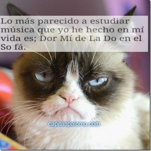 meme del gato gruñon (2)