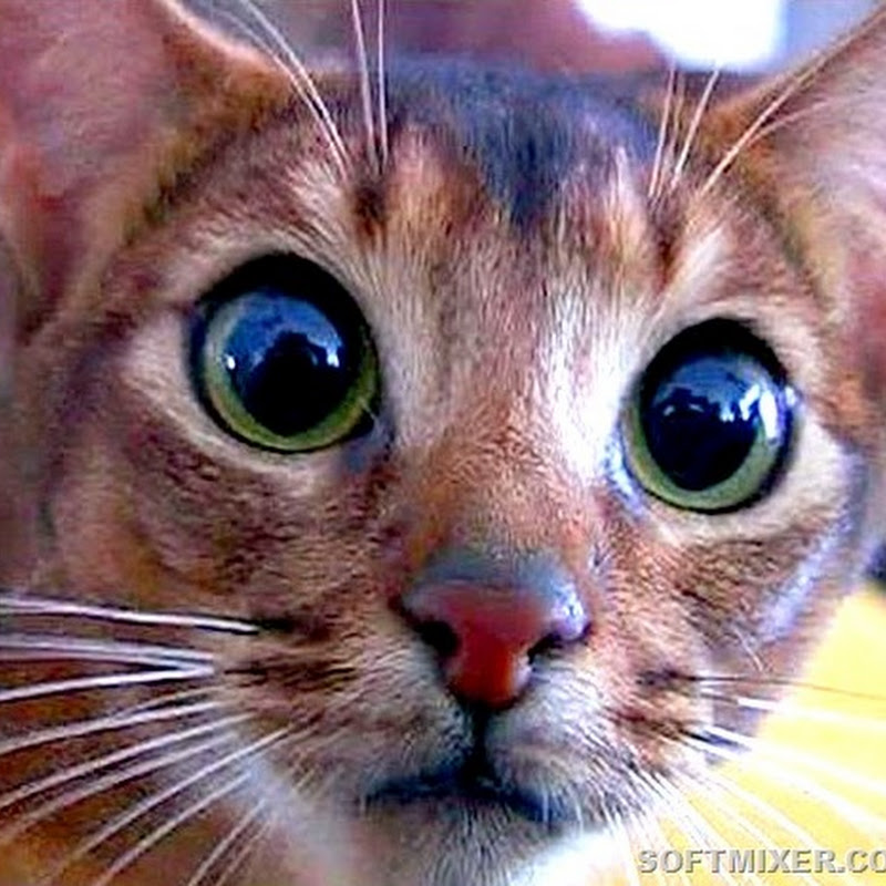 Жуткие факты о семействе кошачьих…