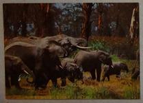 592 11-carte postale
