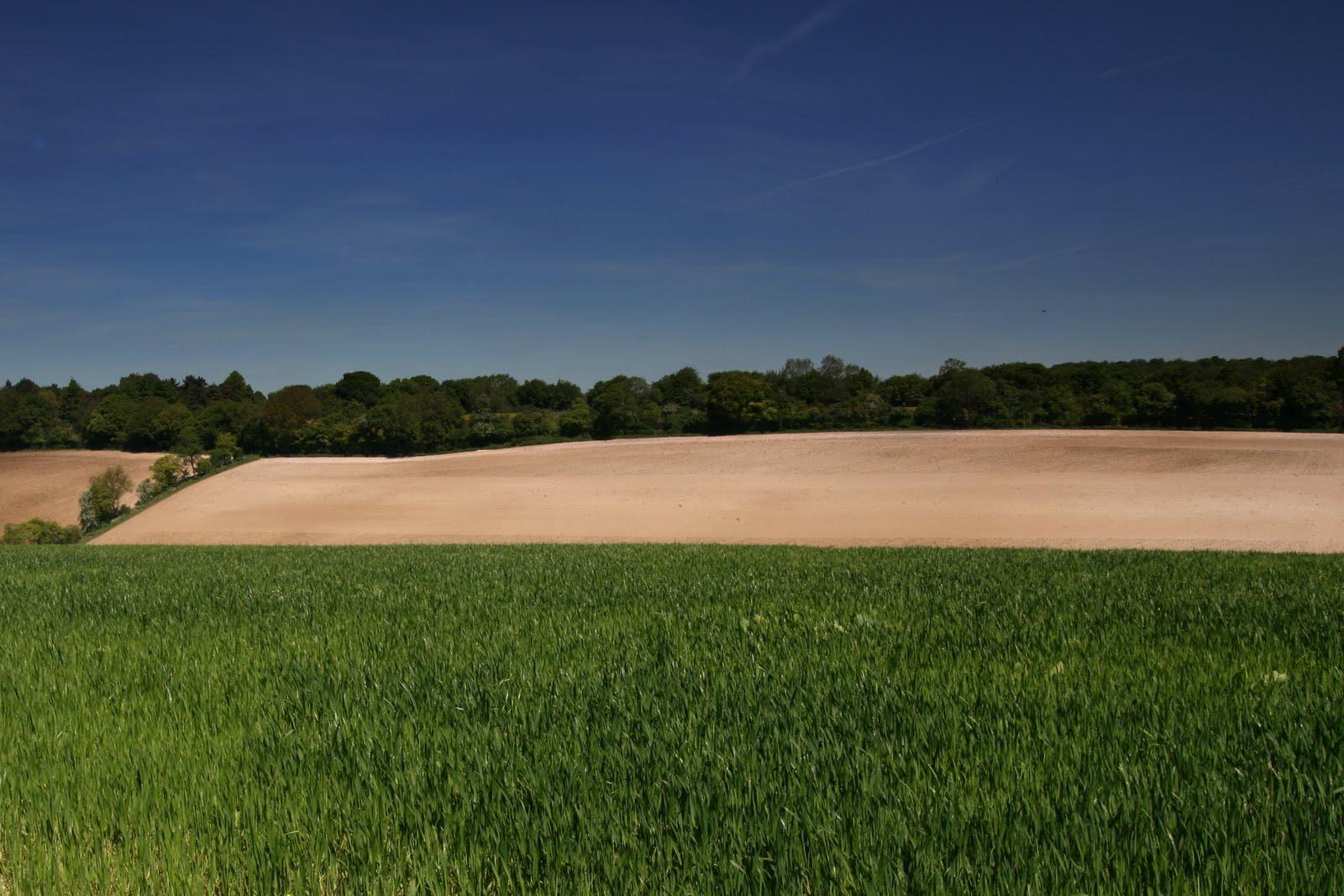 1005 033 Chesham to Great Missenden, England Prime crops