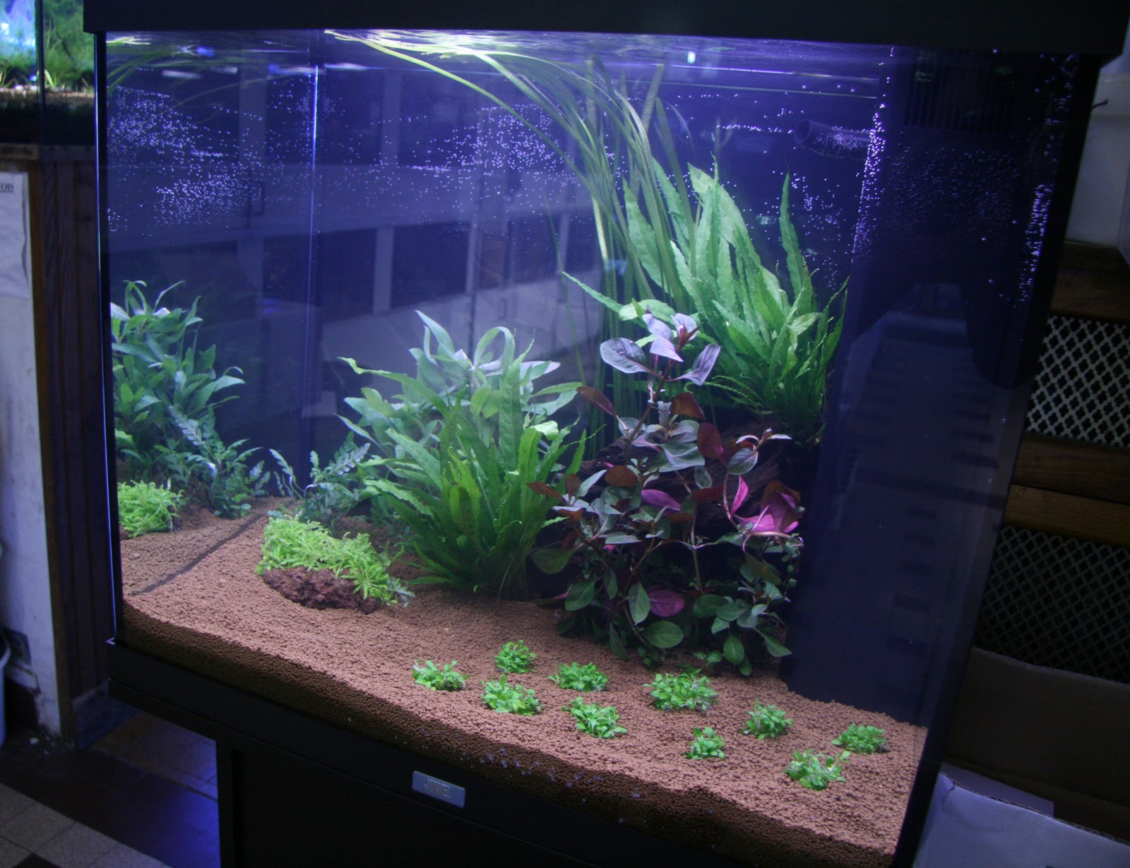 Fishroom Benjy-Sub: Aquascape pour debutant