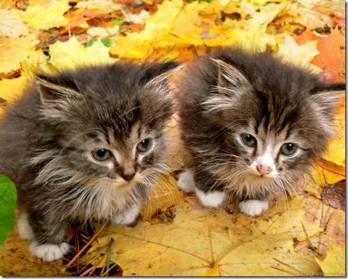 fotos de gatos (5)
